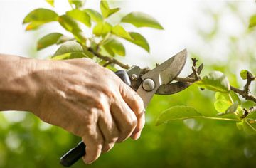 Professional Pruning of Trees, Shrubs & Bushes