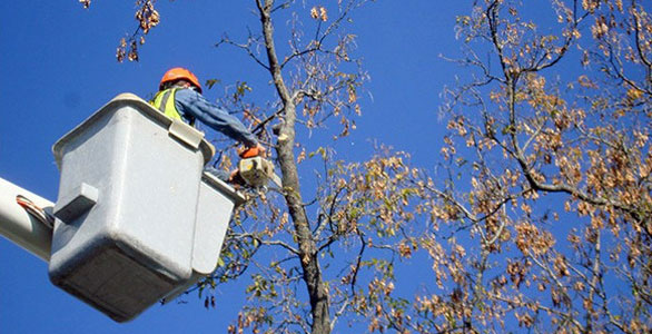 Bucket Truck Mike S Tree Service Tree Removal